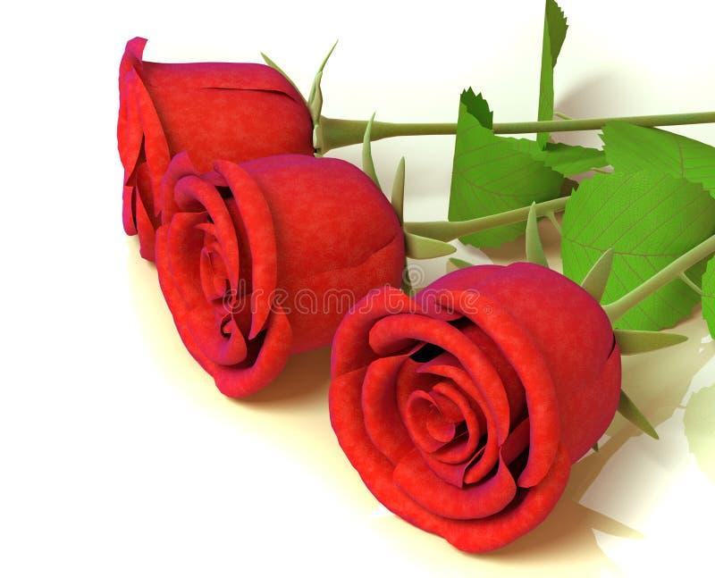 庆祝极大的玫瑰 向量例证