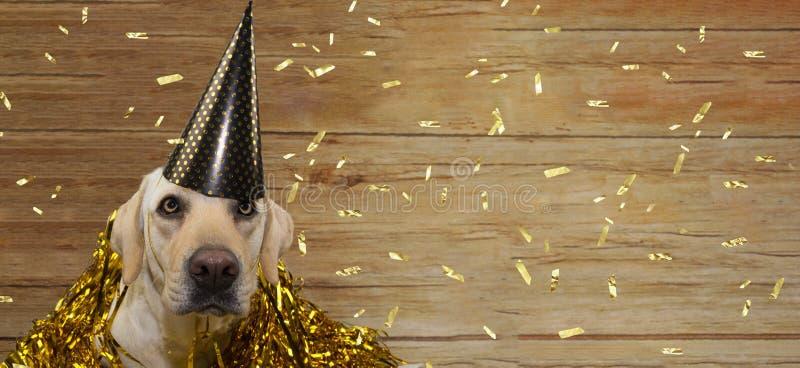 庆祝生日、新年或者周年晚会的横幅愉快的狗反对与金黄的木背景 免版税库存图片