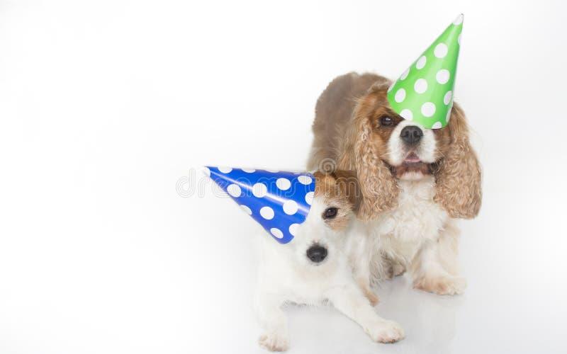 庆祝生日聚会和佩带蓝色的逗人喜爱的夫妇和 免版税库存照片