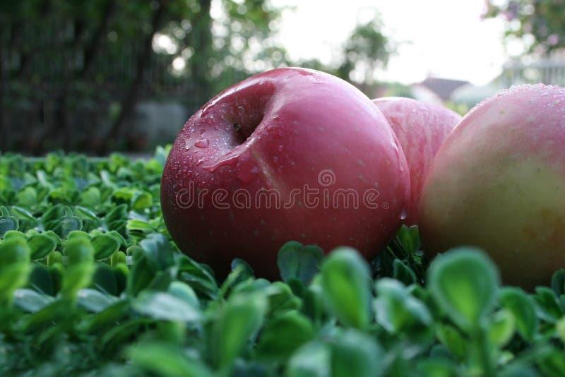 应用 关闭在绿色背景的苹果 库存图片