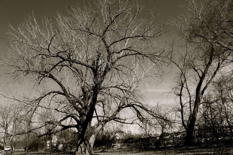 底特律公园视图 图库摄影