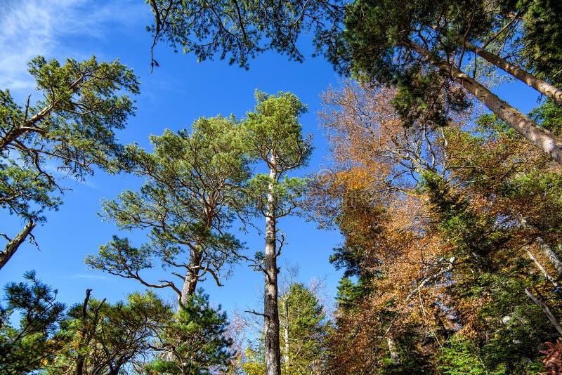 底视图 林木冠在秋天 库存图片