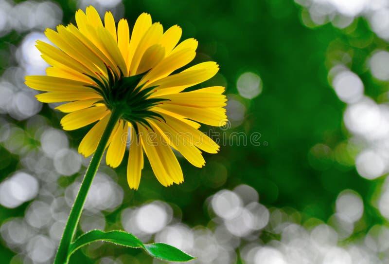 从底部采取的黄色秋天花 库存照片