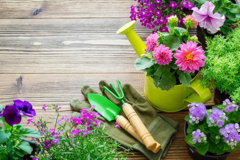 庭园花木和花幼木在花盆 园艺设备 顶视图 免版税库存图片