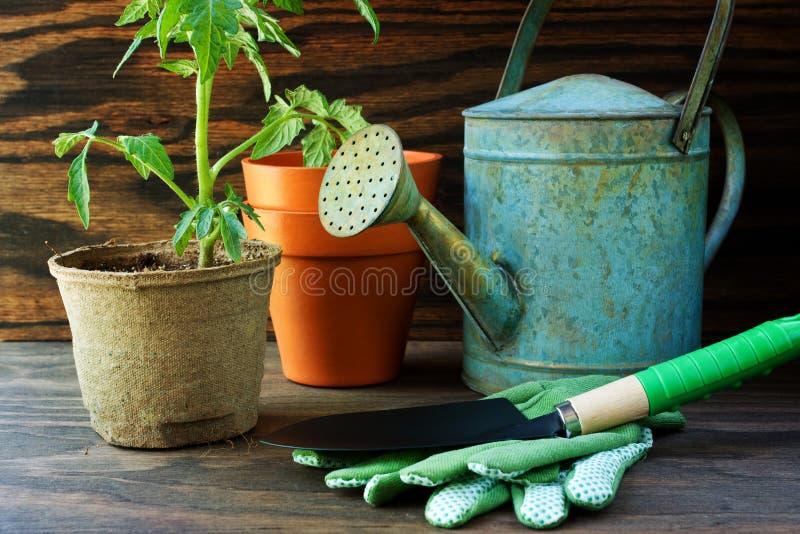 庭园花木蕃茄工具 免版税库存图片