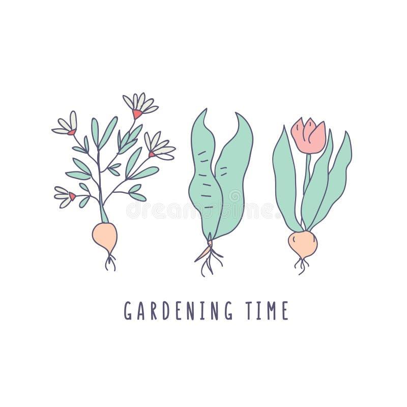 庭院与发光的植物,花的时间字法 库存例证