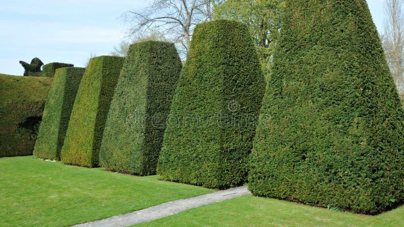庭院修剪的花园 免版税库存照片
