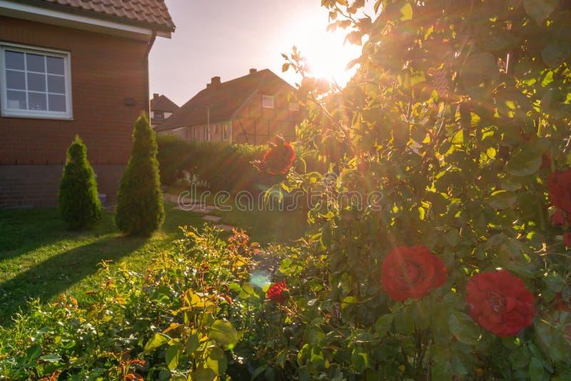 庭院和房子,玫瑰灌木在背后照明场面的在日落期间 免版税库存图片