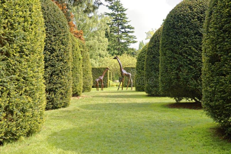 庭院和树 免版税库存照片