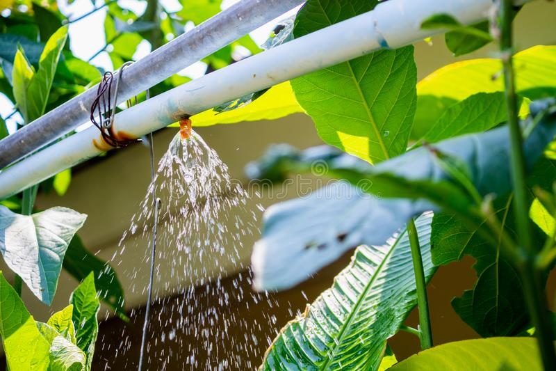 庭院喷水隆头水灌溉系统 库存照片