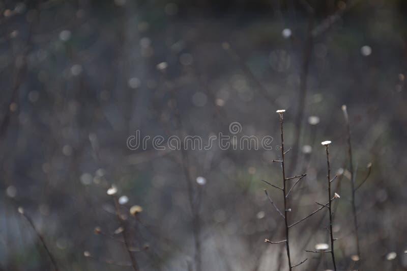 庭院在冬天等待的春天结束时 库存照片