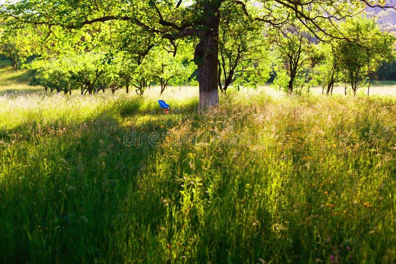庭院在阳光下 图库摄影