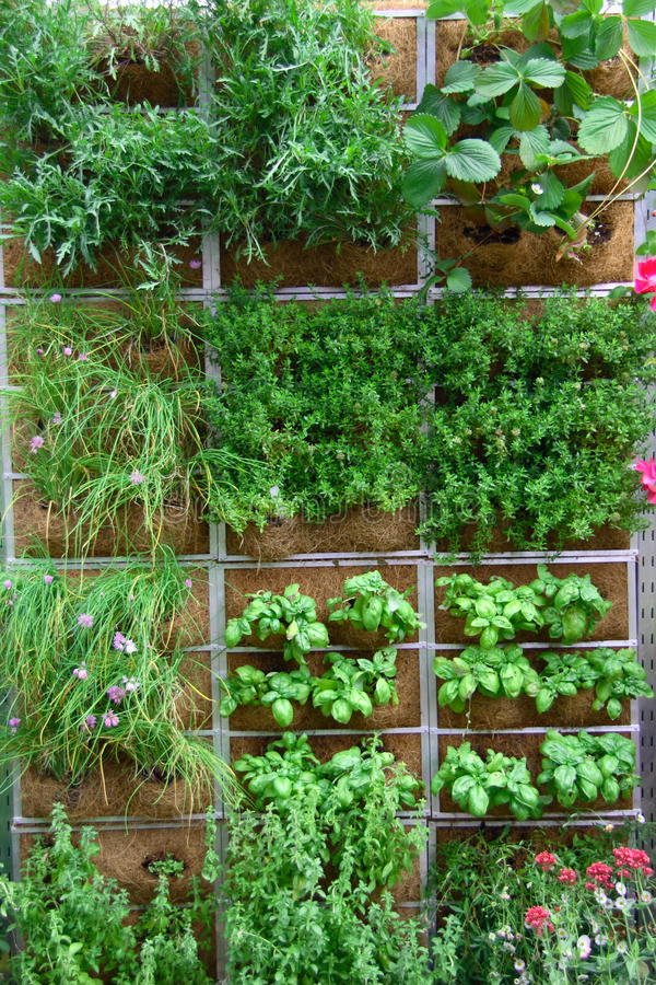庭院垂直 库存照片