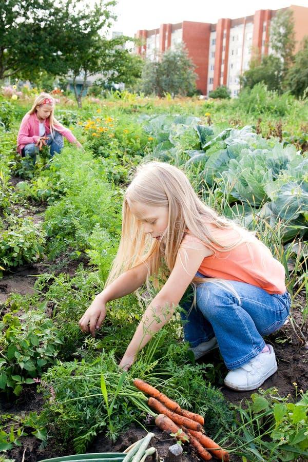 庭院女孩蔬菜运作的年轻人 库存照片