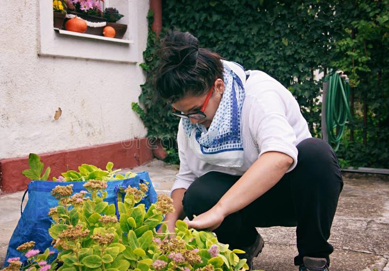 庭院妇女使秋天庭院工作 免版税库存照片