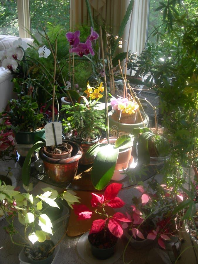 庭院室内jeanette s 图库摄影
