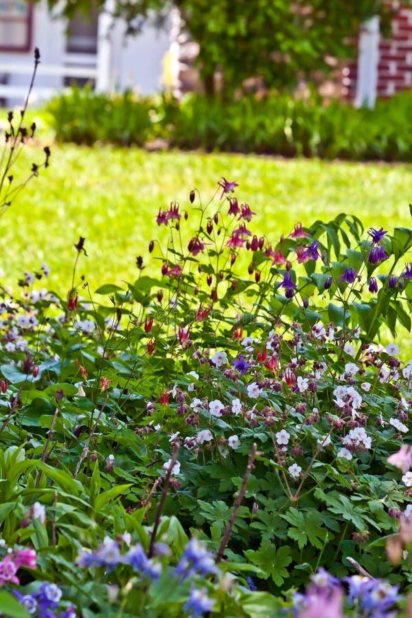 庭院家庭多年生植物 库存照片