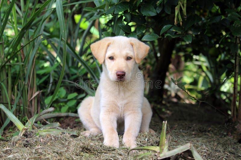 庭院小狗开会 库存图片