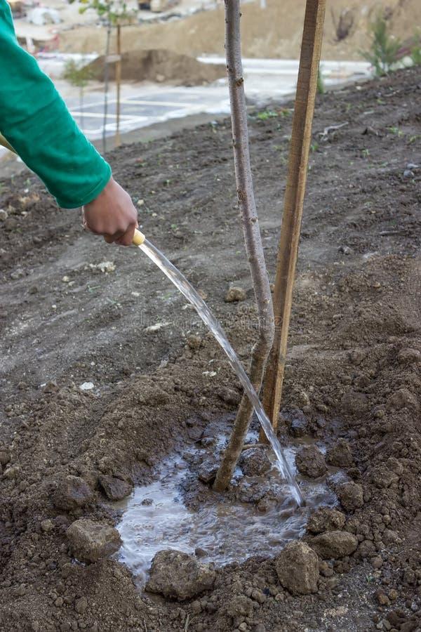 庭院工作者浇灌一棵树 库存照片