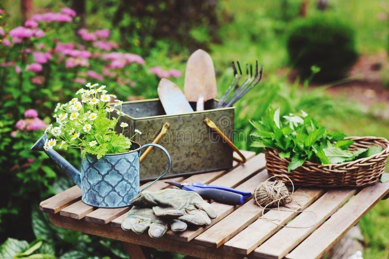 庭院工作静物画在夏天 春黄菊花、手套和工具在室外木的桌上 免版税库存图片
