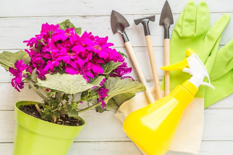 庭院平的被放置的项目 有开花的紫色说谎在白色木背景的花、仪器和橡胶手套的绿色罐 ?? 免版税库存照片