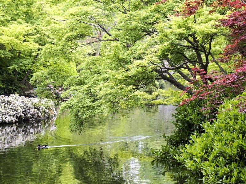 庭院日本人春天 库存照片