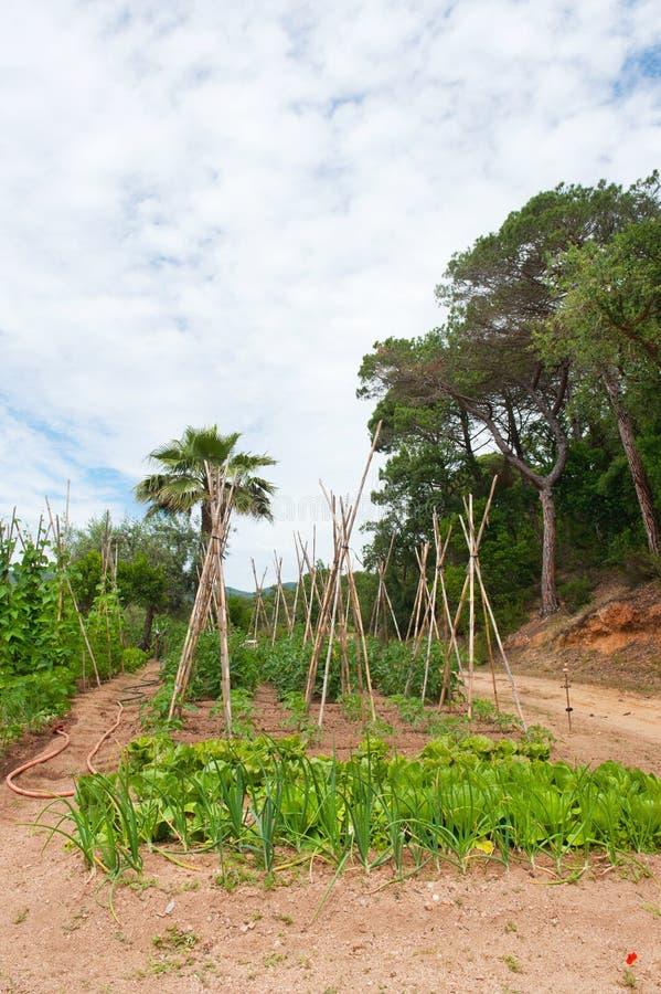 庭院横向蔬菜 免版税图库摄影