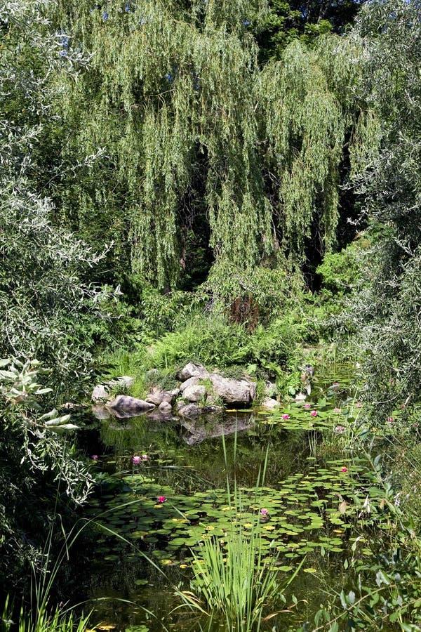 庭院池塘杨柳 库存照片