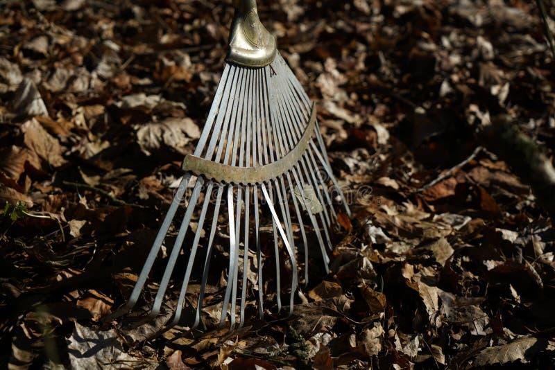 庭院犁耙是特别设立的在秋叶叶子 免版税库存图片