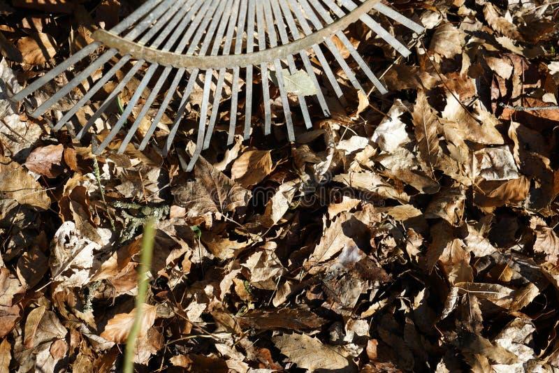 庭院犁耙是特别设立的在秋叶叶子 库存照片