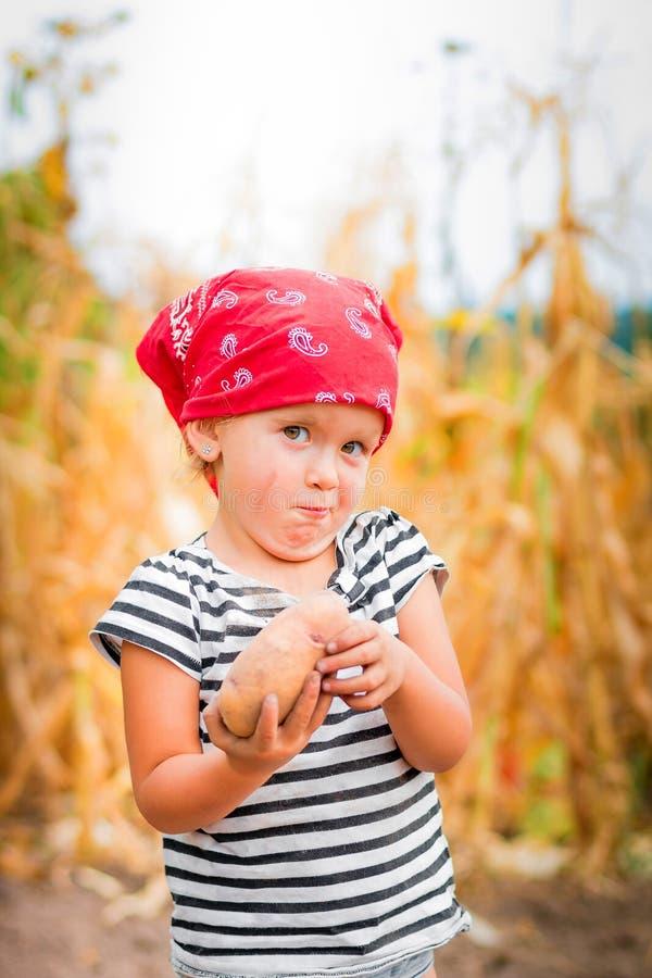 庭院的女婴有土豆收获的在她的胳膊的临近领域干燥玉米背景 红色班丹纳花绸的肮脏的孩子 库存图片