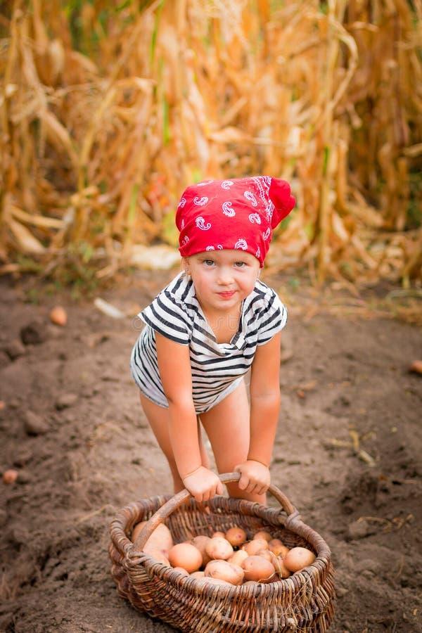 庭院的女婴有土豆收获的在篮子的在领域干燥玉米背景附近 红色班丹纳花绸和st的肮脏的孩子 免版税库存照片