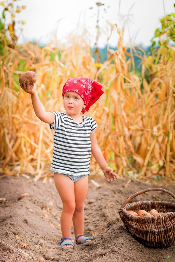 庭院的女婴有土豆收获的在篮子的在领域干燥玉米背景附近 红色的肮脏的孩子 库存照片