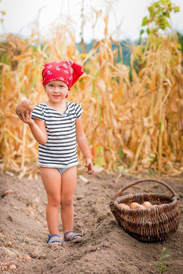 庭院的女婴有土豆收获的在篮子的在领域干燥玉米背景附近 红色的肮脏的孩子 免版税库存图片