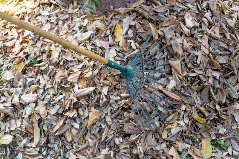 庭院的打扫干燥叶子干净在秋季 免版税库存照片