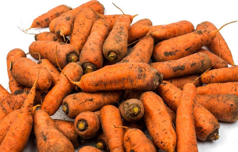 从庭院的新鲜的被收获的红萝卜 库存图片