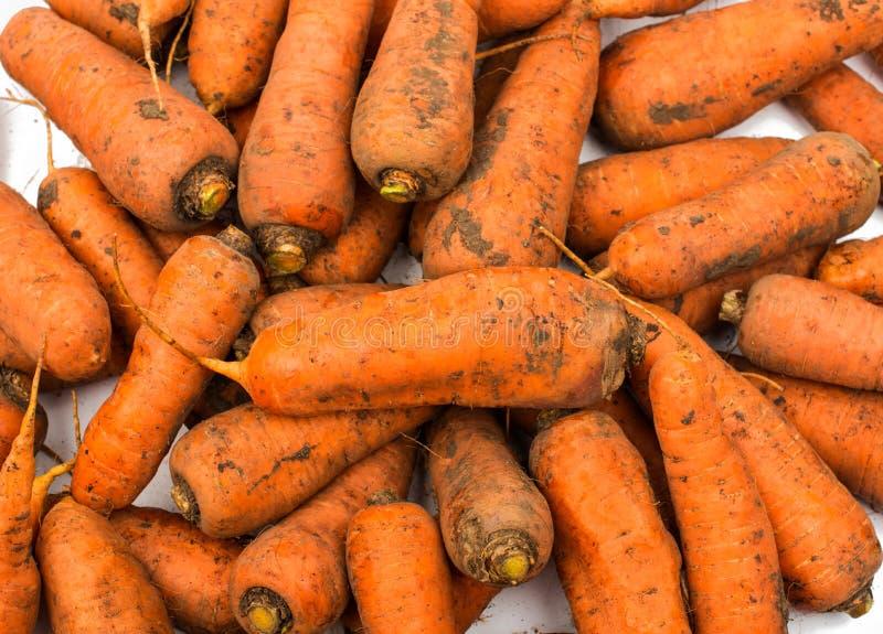 从庭院的新鲜的被收获的红萝卜 图库摄影