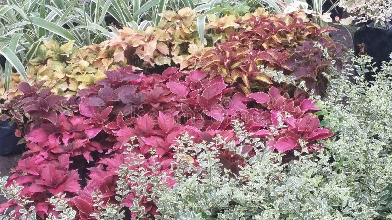 从庭院的柔软光滑的野生植物 免版税库存照片