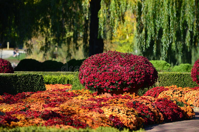 庭院的秋天妈咪 库存图片