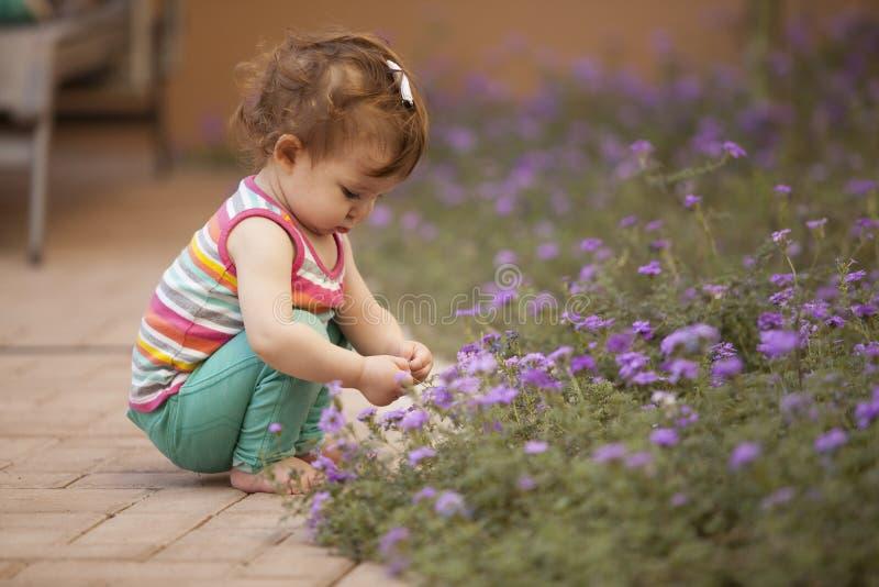 从庭院的采摘花 库存图片