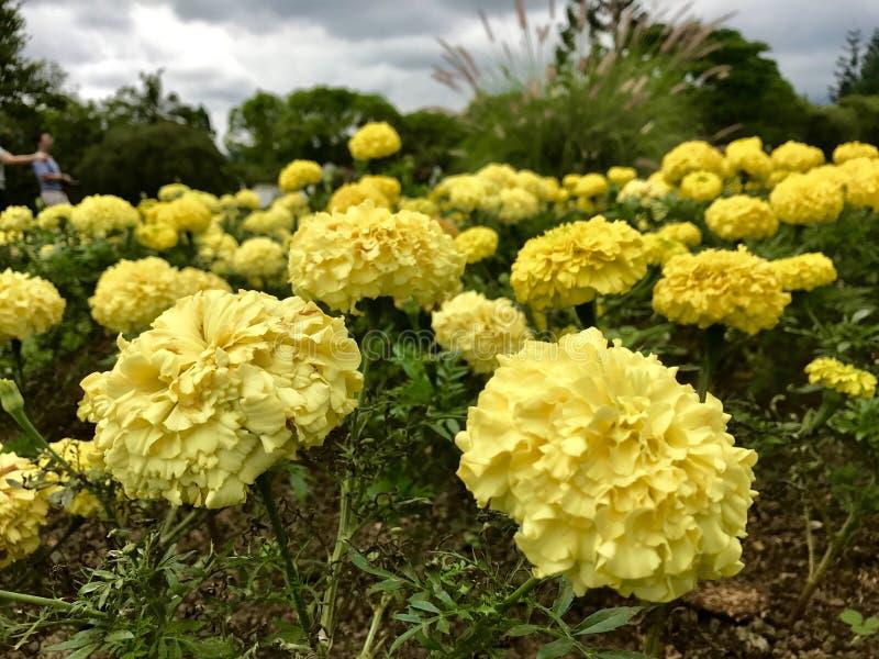 庭院的黄色光华 免版税图库摄影