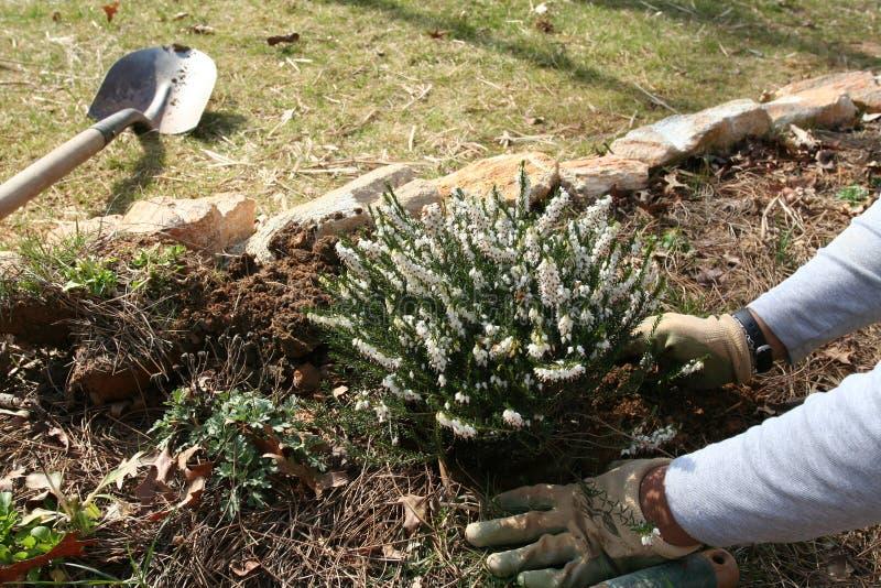 庭院种植 图库摄影