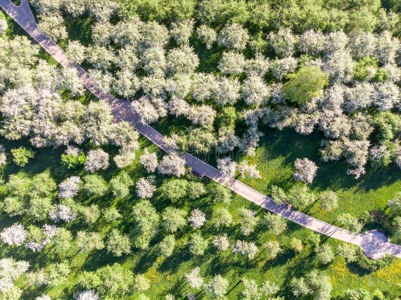 庭院空中照片有开花的苹果树的 图库摄影