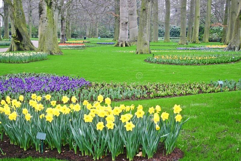 庭院绿色春天 免版税库存图片