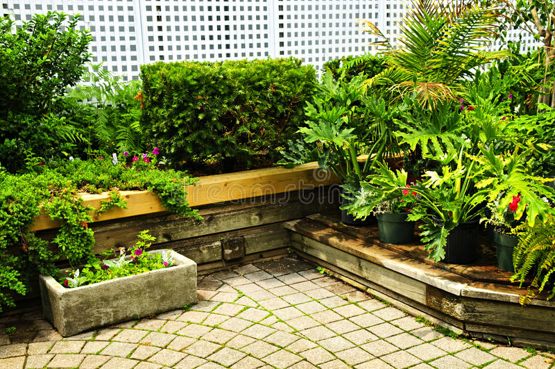 庭院绿色醉汉 库存图片