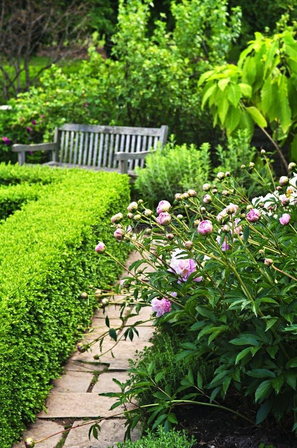 庭院绿色醉汉 库存照片