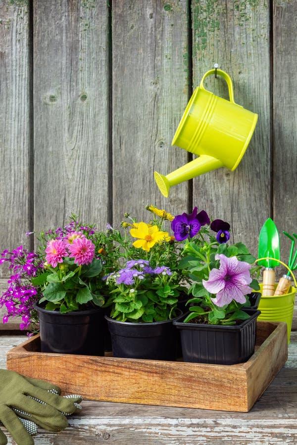 庭院花幼木在木板箱的 垂悬的喷壶 免版税库存图片