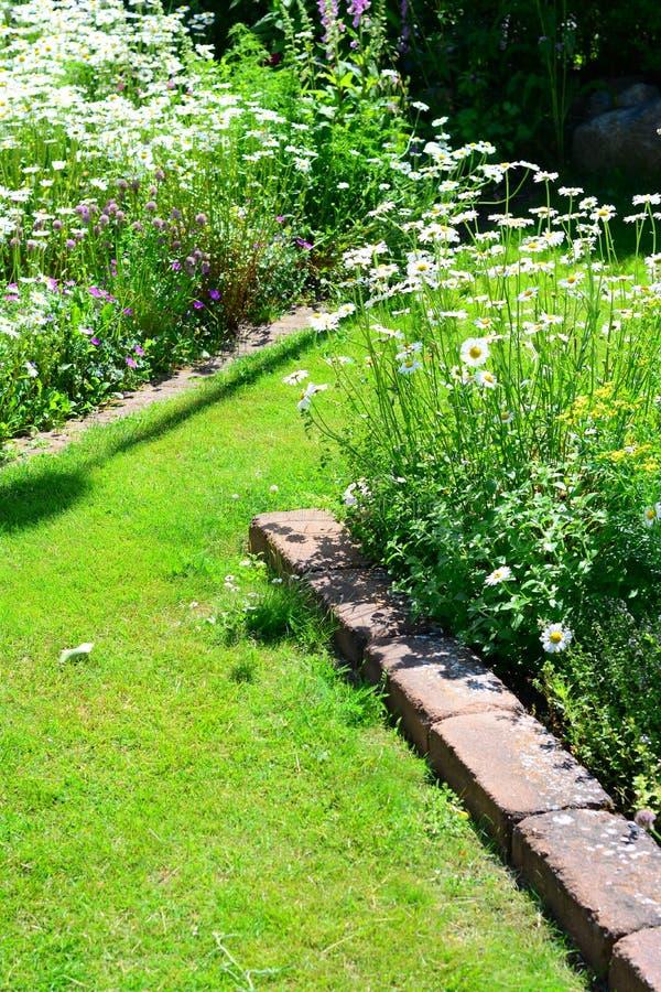 庭院花美妙地发光盛夏 库存图片