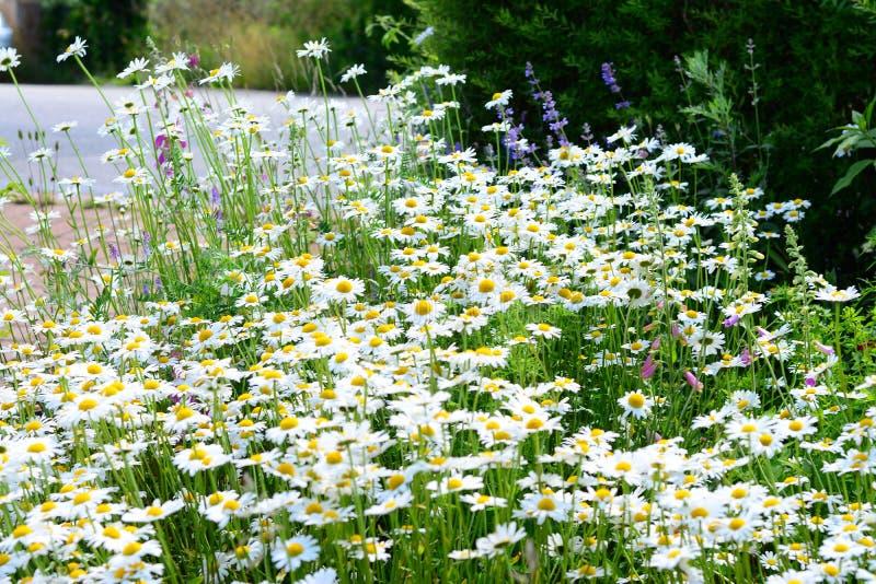 庭院花美妙地发光盛夏 免版税图库摄影
