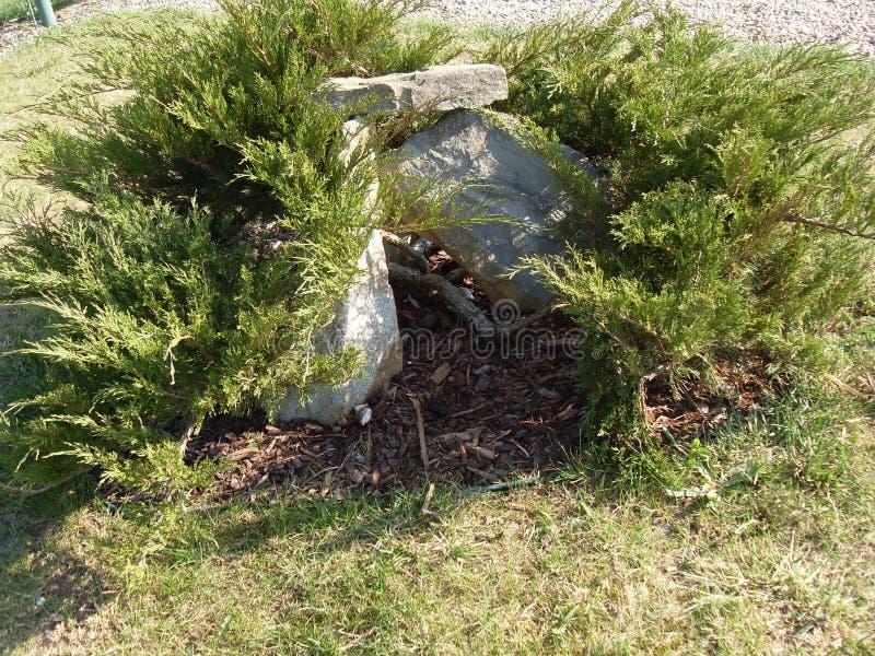 庭院草灰色绿色物质植物石头 免版税库存图片